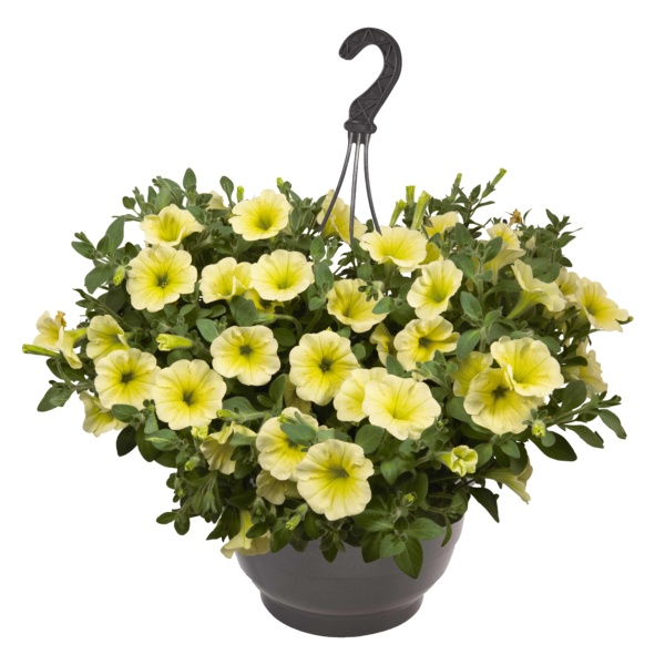 Petunia Surprise Yellow