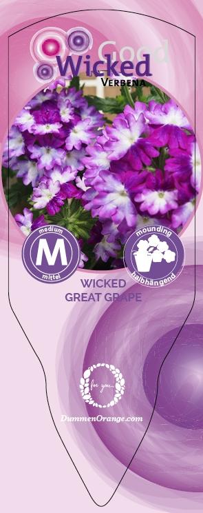Verbena Wicked Great Grape 2021