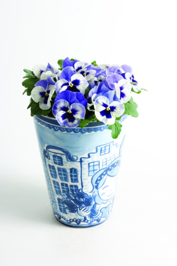 Viola wittrockiana Matrix™ F1 Delft Blue